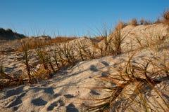 plats för sandunesand för strandgräspapamoa Arkivbild