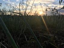Plats för solnedgånglantgårdfält Arkivfoto