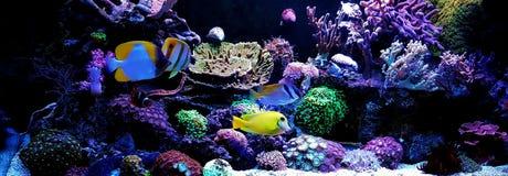 Plats i saltvattens- akvarium f?r korallrev arkivfoton