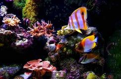 Plats i saltvattens- akvarium f?r korallrev royaltyfria bilder