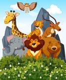 Plats med många vilda djur i parkera Arkivfoton