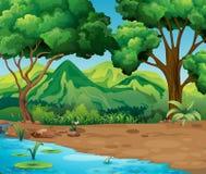 Plats med träd och floden i skog Royaltyfri Foto
