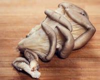 Plattachampinjoner - ostron Royaltyfria Bilder