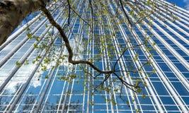 Plattaträd mot glasväggen, Paris Arkivfoton