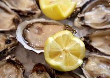 Platte der Austern Stockfotos