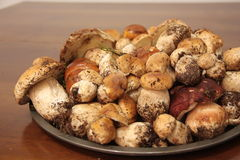 Platte mit frischen Porcini-Pilzen sammelte im Wald Lizenzfreie Stockfotografie