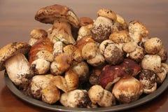 Platte mit frischen Porcini-Pilzen sammelte im Wald Lizenzfreies Stockfoto