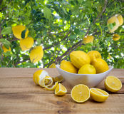 Platte mit Zitronen auf Holztisch über Obstbaumhintergrund Stockfotos