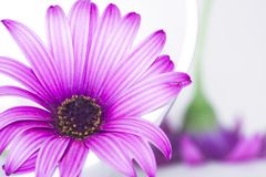 Platte und Blumen Stockfoto