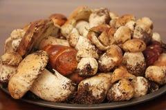 Platte von frischen Porcini-Pilzen sammelte gerade im Wald Lizenzfreie Stockfotos