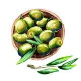 Platte von grünen Oliven, Draufsicht Aquarellillustration vektor abbildung