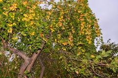 Platteland, bladeren, aard Groene, aardboom geel Stock Foto