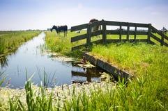 Platteland buiten Amsterdam, Nederland Stock Fotografie