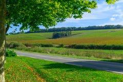 Platteland en wijngaarden op Chablis-gebied stock afbeeldingen