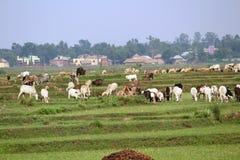 Platteland India Royalty-vrije Stock Afbeelding