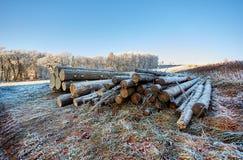 Platteland met bevroren logboeken Stock Fotografie
