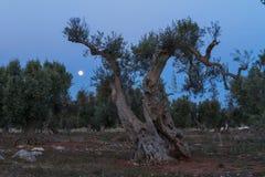 Platteland met bomen en papavers Stock Afbeeldingen