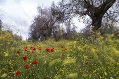 Platteland met bomen en papavers in Windy Day Royalty-vrije Stock Afbeelding