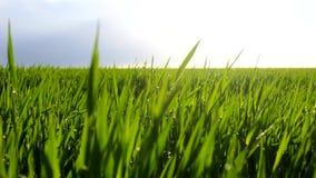 Platteland met installaties en zon stock footage