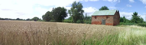 Platteland: Schuur en Wheatfield Stock Foto's