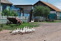 Platteland in Siberië Royalty-vrije Stock Foto's
