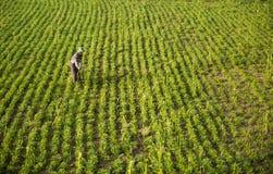 Platteland van Myanmar Royalty-vrije Stock Foto's