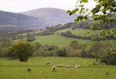Platteland in Wales Royalty-vrije Stock Fotografie