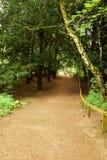 Plattelands boomweg Stock Foto's