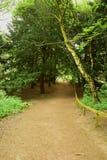 Plattelands boomweg Royalty-vrije Stock Foto