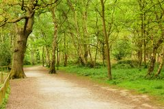 Plattelands boomweg Royalty-vrije Stock Afbeelding