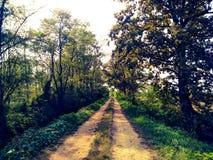 Plattelands landelijke bosweg stock afbeeldingen