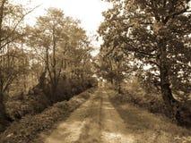 Plattelands landelijke bosweg royalty-vrije stock afbeelding