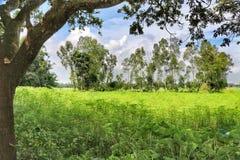 Plattelands mooie natuurlijke mening royalty-vrije stock afbeeldingen
