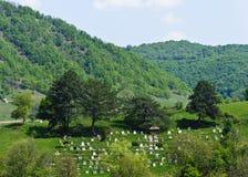 Plattelandsbegraafplaats Stock Fotografie
