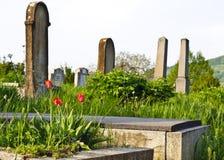 Plattelandsbegraafplaats met rode tulpen stock foto