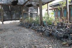 plattelandsbinnenplaats Stock Fotografie