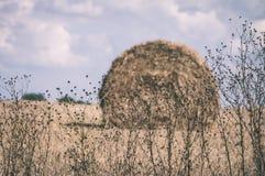 plattelandsgebieden in de vroege lente - uitstekende retro ziet eruit Stock Afbeelding