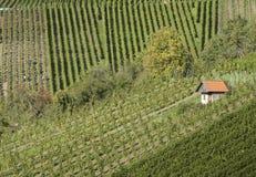 Plattelandshuisje in een wijngaard Stock Afbeelding