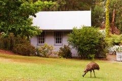 Plattelandshuisje en emoe royalty-vrije stock foto