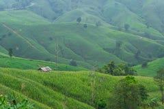 Plattelandshuisje in landbouwbedrijf op berg Stock Foto
