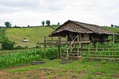 Plattelandshuisje op een graangebied in Chiangmai Stock Afbeeldingen
