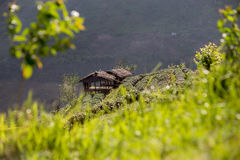 Plattelandshuisje op theeaanplanting stock afbeelding