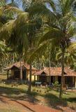 Plattelandshuisjes in een palmbosje. Stock Fotografie