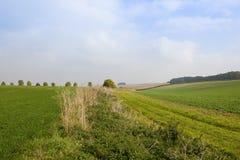 Plattelandslandschap Stock Afbeelding
