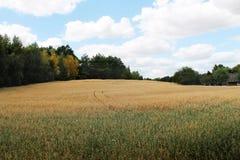 Plattelandslandschap - gouden gebieden royalty-vrije stock afbeeldingen