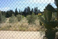 Plattelandslandschap met bomen en bloemen Stock Fotografie