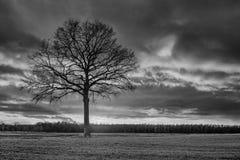 Plattelandslandschap met een mooie boom en een kleurrijke zonsondergang, Weelde, Vlaanderen, België stock afbeelding