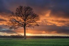 Plattelandslandschap met een mooie boom en een kleurrijke zonsondergang, Weelde, Vlaanderen, België royalty-vrije stock fotografie