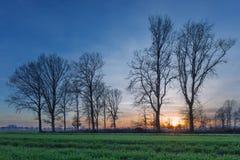 Plattelandslandschap met een rij van bomen en een kleurrijke zonsondergang, Weelde, België stock foto
