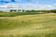 Plattelandslandschap met gerst en aardappelgebieden en landbouwbedrijf yar Royalty-vrije Stock Foto's